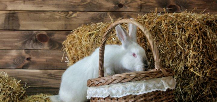 Пасхальная фотосессия с живым кроликом от фотостудии «ZAVARKA»